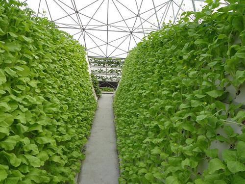 法国沙托鲁蔬菜实验基地